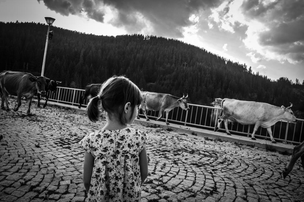 Калина гледа крави, които преминават по язовирната стена на язовир Доспат. Доспат е град от селски тип, в чийто най-скъп ресторант може да вечеря семейство за 30 лева, а пеша се обхожда за около 10 минути лежерен ход. Много приятно.
