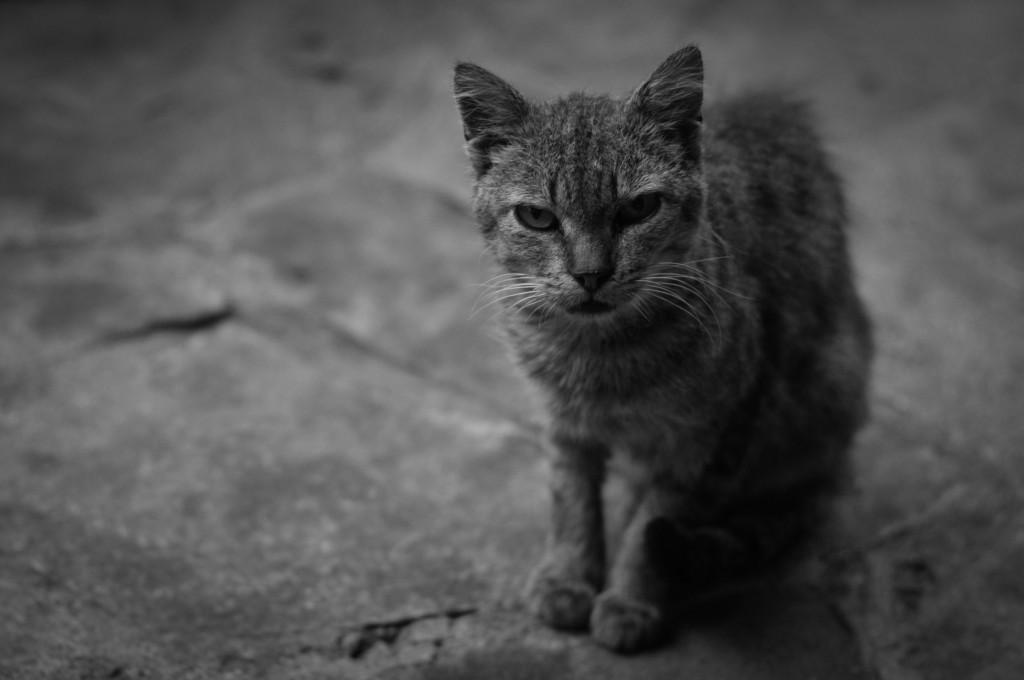 Това е котка от Доспат. Дадохме й супер много храна, но тя продължи да си гледа така.